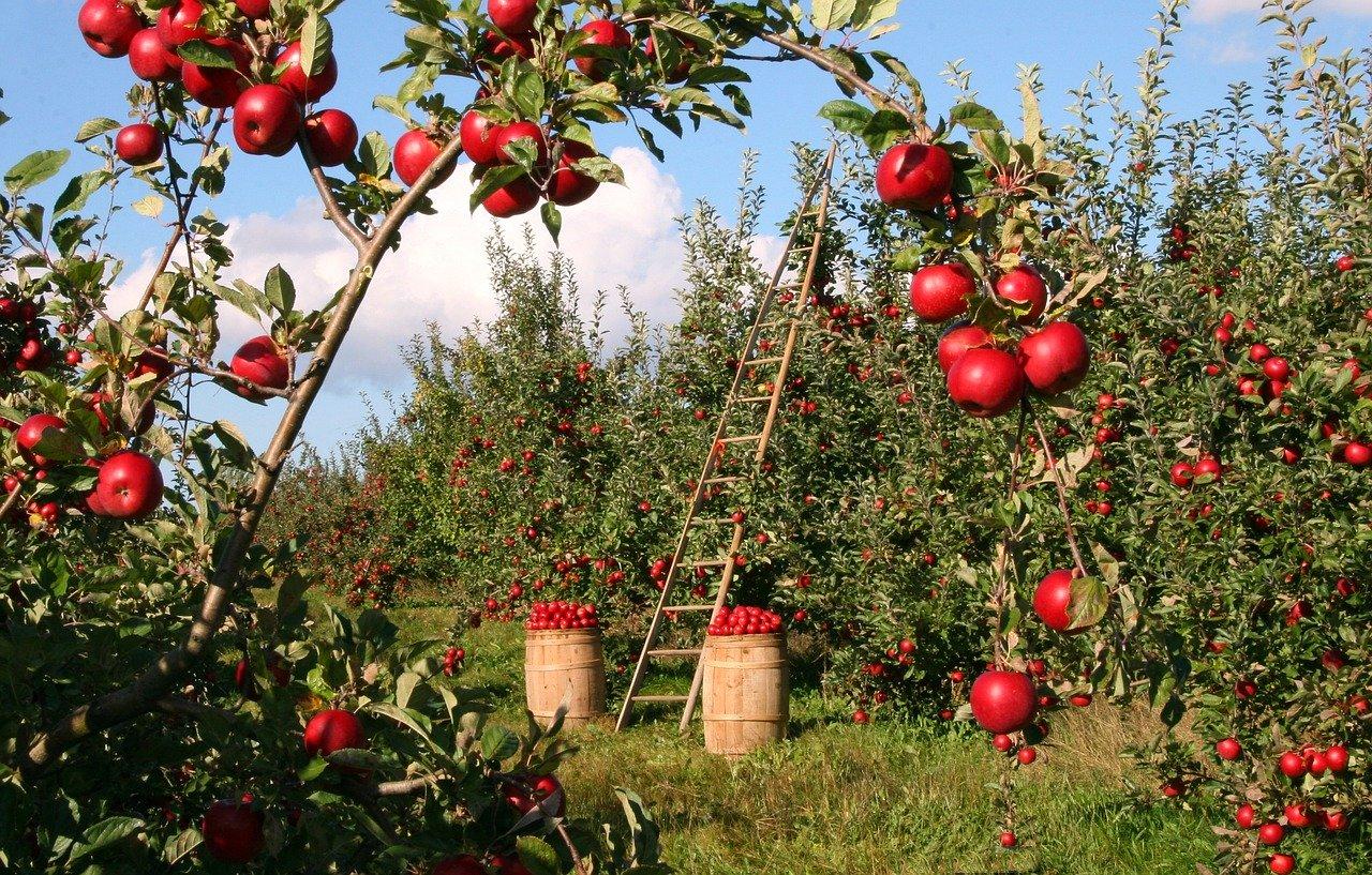 Hoe je het best kunt genieten van je tuin
